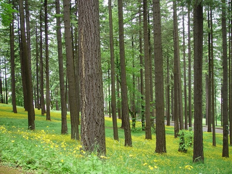Facts About Wood & Trees