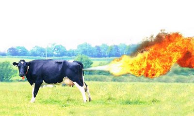 Do cows produce more methane than buffalo?