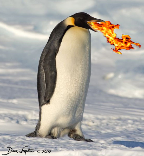 flaming-hot-antarctic-penguin