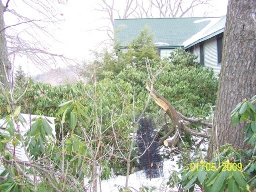 mohonk-lake_-ny_-oleanders_-tree-limb-_northeast_
