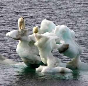 polar_bears480
