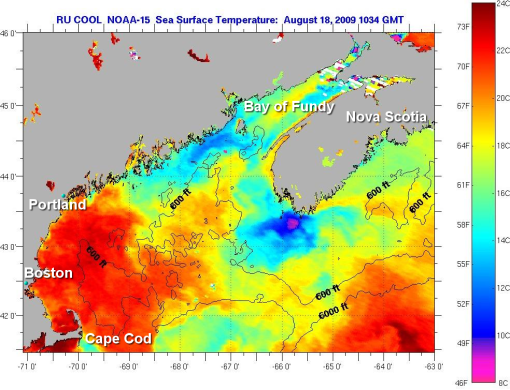 "Sea Surface Temperatures ""warmest on record""…but"
