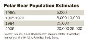 polar bear numbers