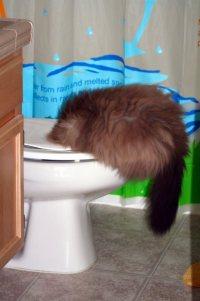 New Felis Catus