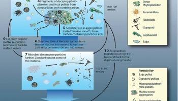 Ocean iron fertilization CO2 sequestration experiment a