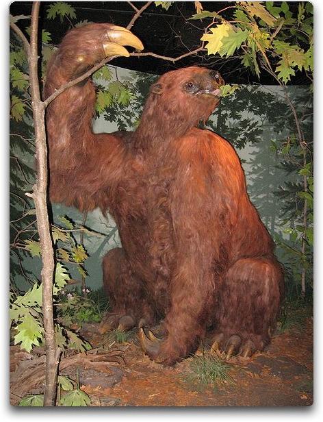 shasta ground sloths image source