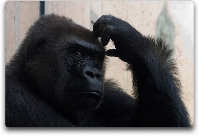 I try to remember gorilla