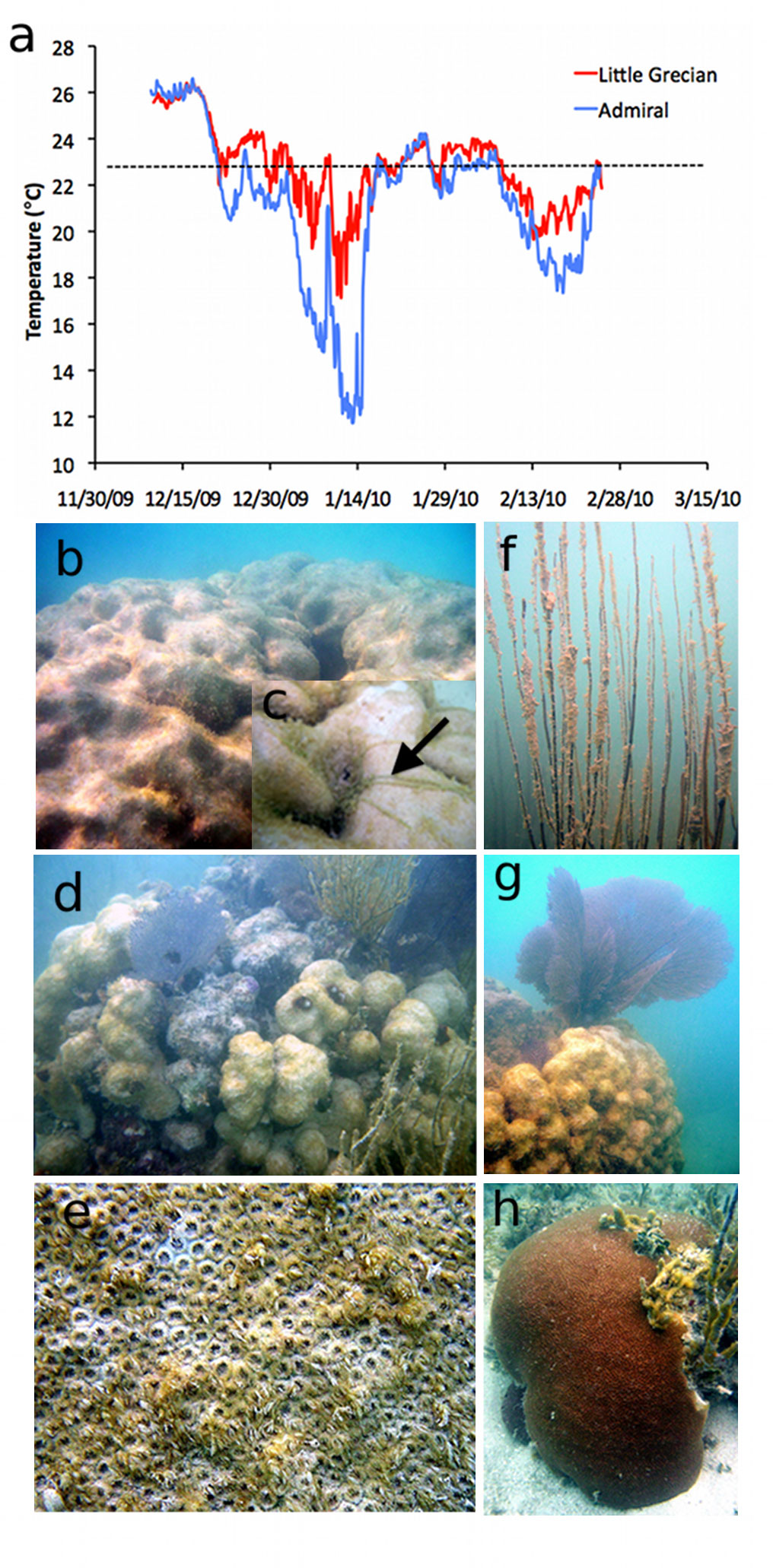 Study Severe Low Temperatures Devastate Coral Reefs In