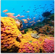 colorful reef photo