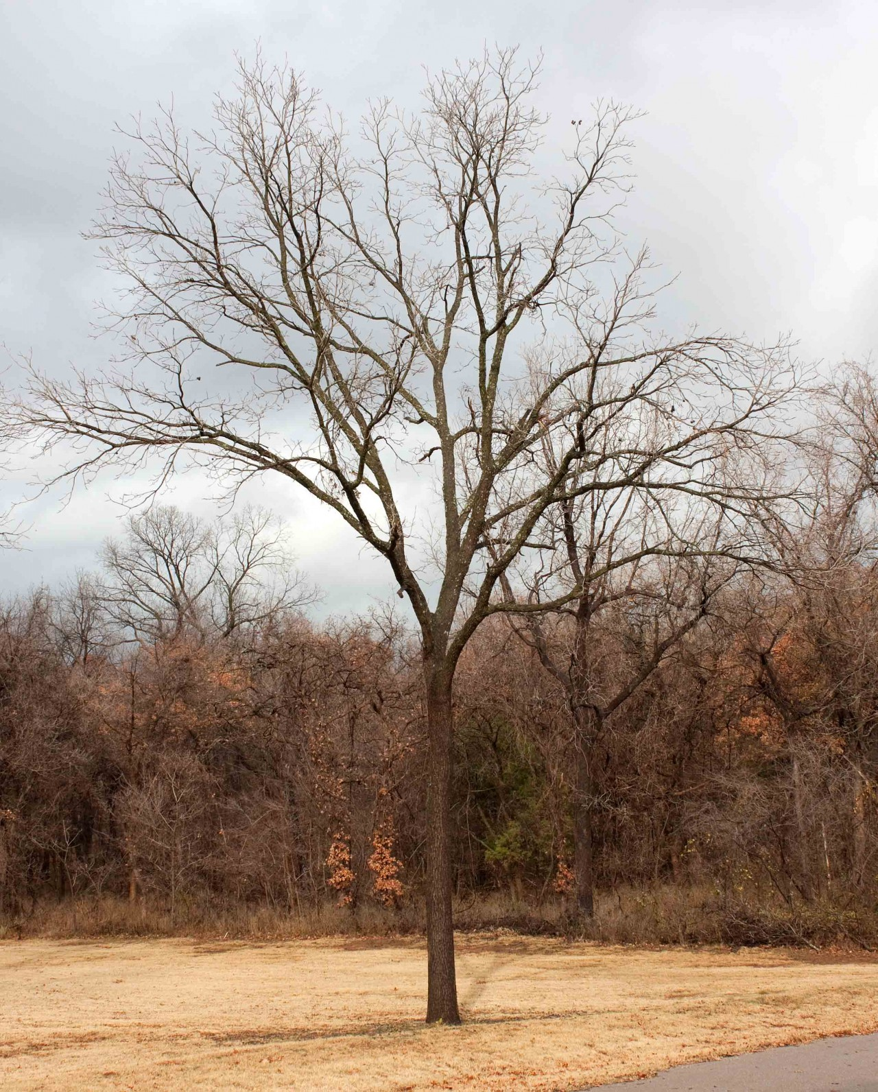 Global Warming and Walnut Trees: a Case Study in Deception | Watts