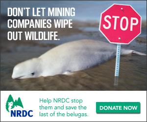 NRDC_YearEnd_Stop-BadGuys_DonateNow_300x250[1]