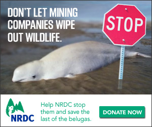 NRDC_YearEnd_Stop-BadGuys_DonateNow_300x250[1]