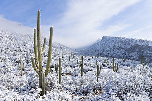 arizona-snow