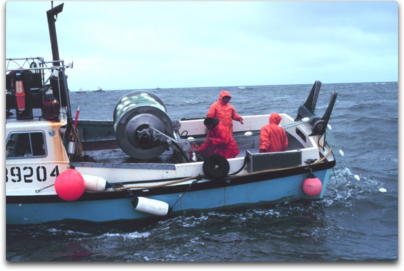 salmon gill net
