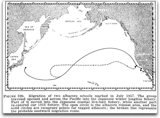 albacore tuna map