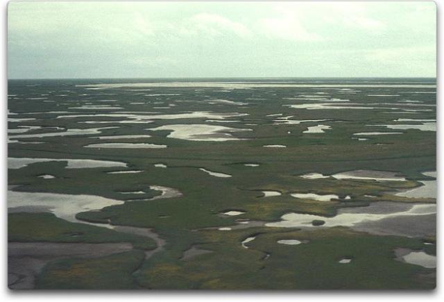 kuskokwim delta wetlands