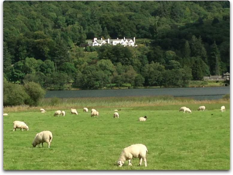lake and lambs