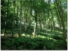 lake windermere fern forest