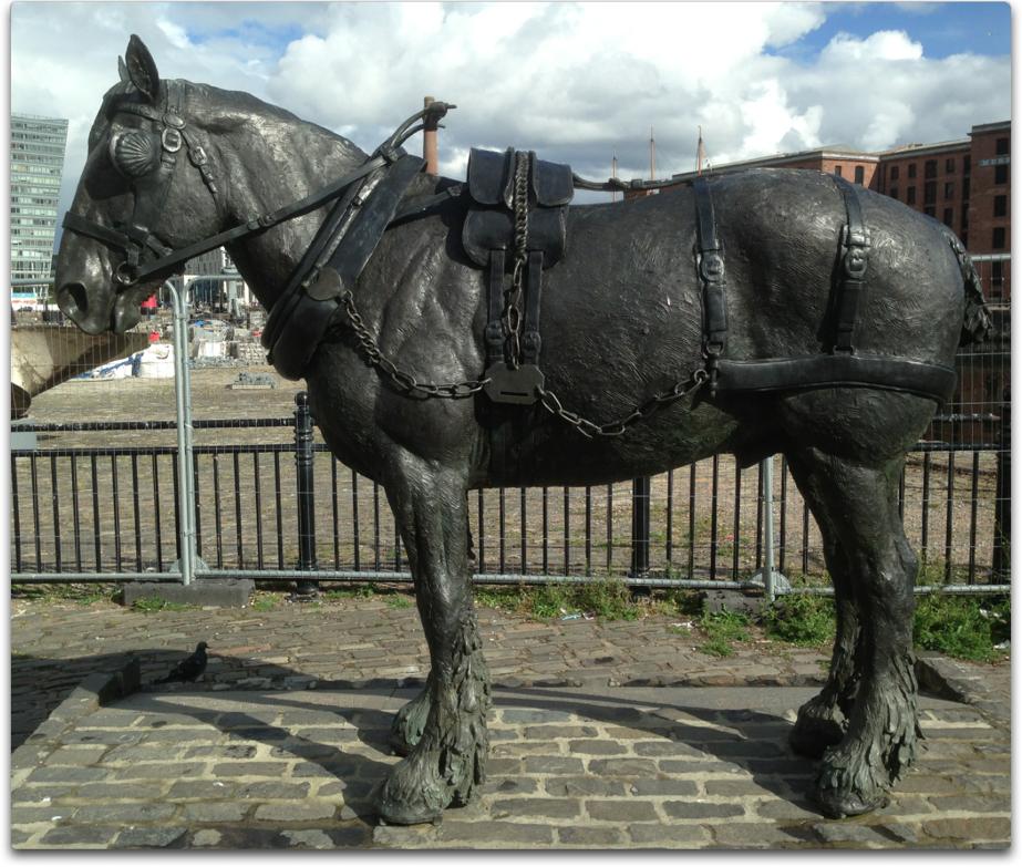 liverpool horse