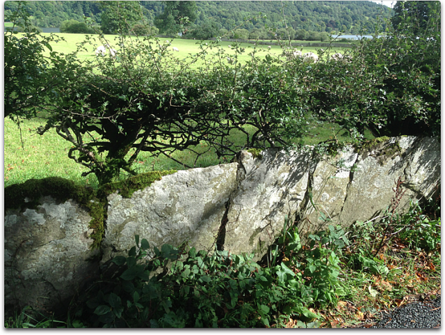 stone fence lakeland