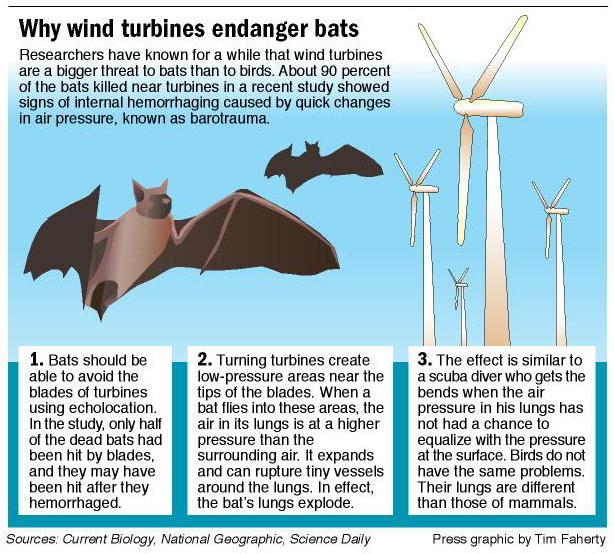 Study shows wind turbines killed 600,000 bats last year | Watts Up ...