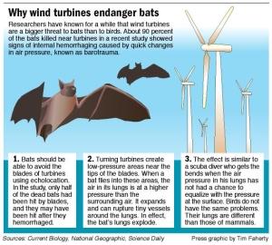 Bats-graphic[1]