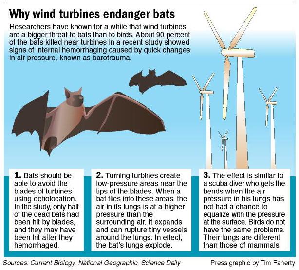 Image result for wind turbines vs birds