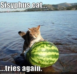 sisyphus-cat