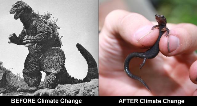 salamander_shrinking_climate_Change1
