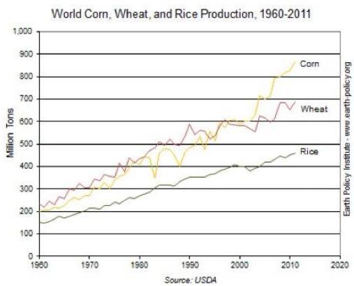 World-wheat-corn-rice_trends