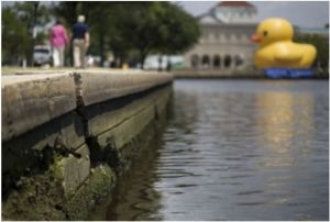 norfolk_rubber_ducky