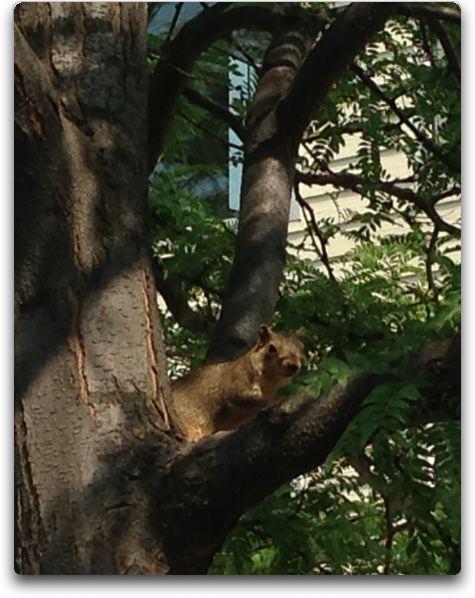 missoula squirrel