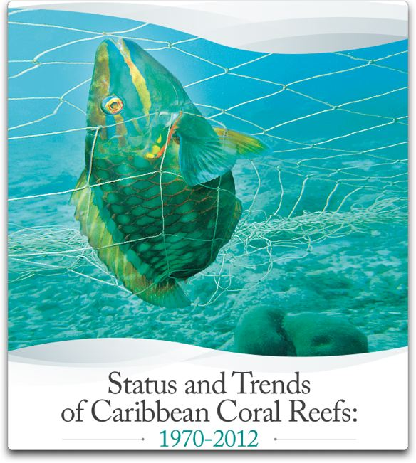 status and trends of caribbean coral reefs