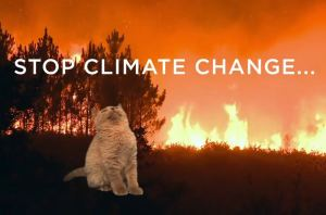 climate_march_cats