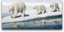 crystal cruises polar bears
