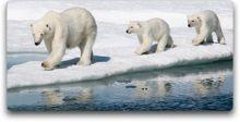crystal cruises polar bears