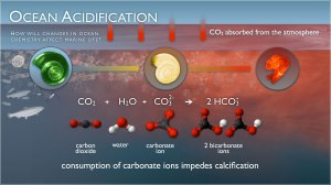 pmel-ocean-acidification