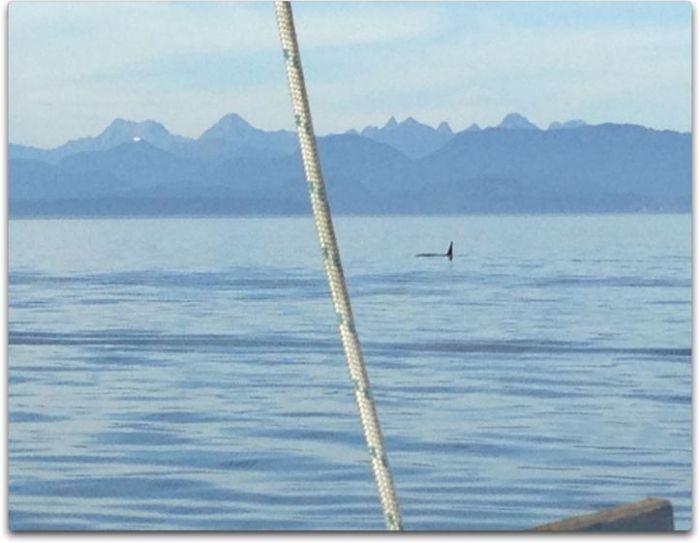 day three orca