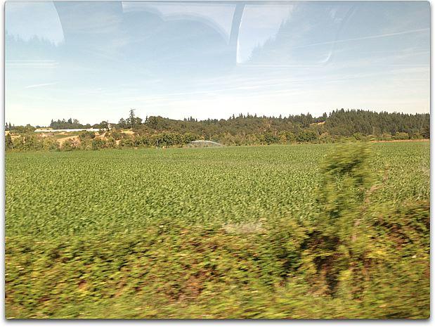 train day corn