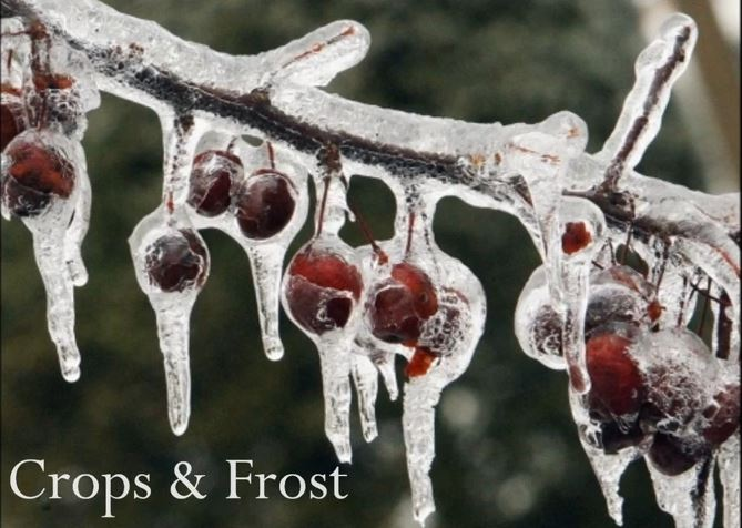 Crops_damage_frost