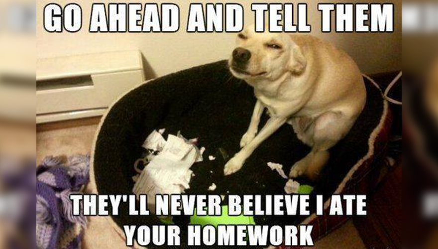 Dog eating homework