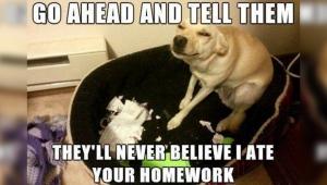 dog-homework[1]