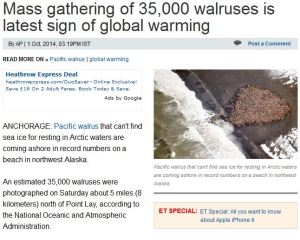 mass_walrus