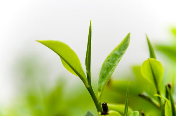 -plants-are-globally-getting-more-efficient-thanks-to-rising-carbon-dioxide
