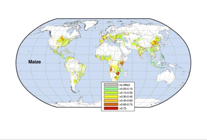 The connection between climate and yield variability differs around the world. It is strongest in the red areas and weakest in the light green and gray areas. Credit University of Minnesota Institute on the Environment