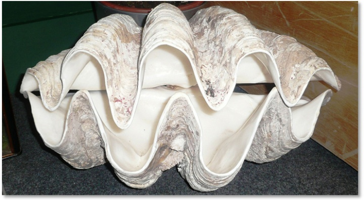 http://wattsupwiththat.com/2015/01/05/hottest-year-ever-giant-clam-reveals-middle-ages-were-warmer-than-today