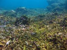 coral-reef-panama
