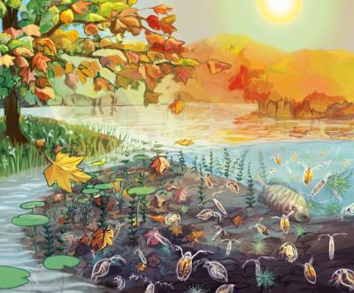 leaves-pond-ecosystem