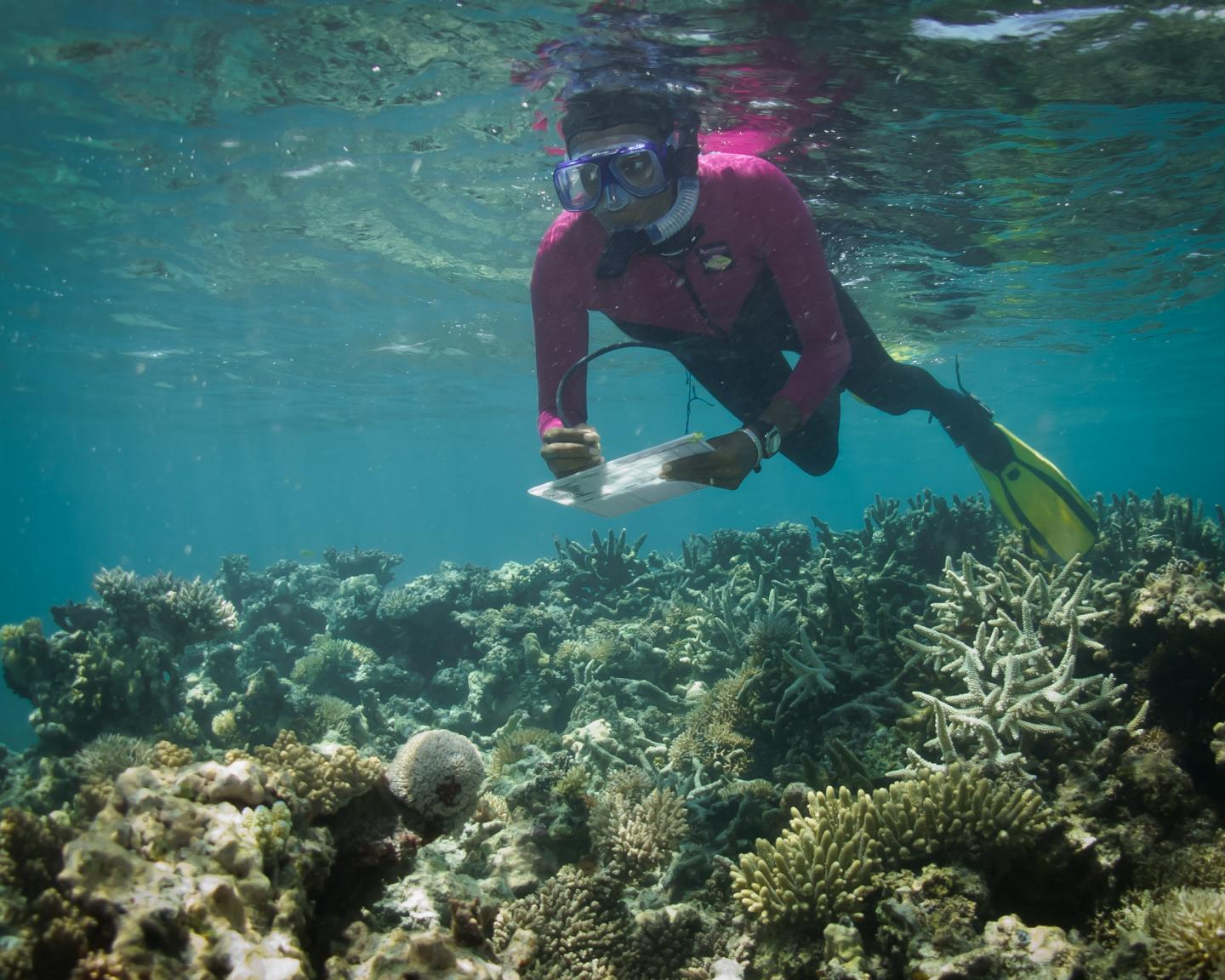 A WCS scientist recording data on coral cover in coastal Kenya. A new climate stress model using both environmental data and field observations provides scientists with a more accurate predictive tool than more widely used models based on solely temperature and coral survival thresholds, according to a new study by WCS and other groups. Credit Emily Darling/WCS