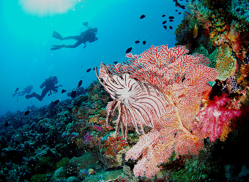 What bearing does Cambrian era ocean chemistry have on ocean acidification today?